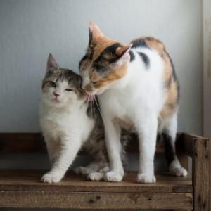 cat lick kitty
