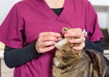 deworming a cat