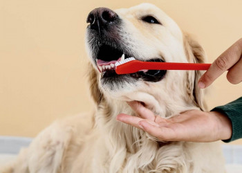 How to Clean Your Dog's Teethfeatured image