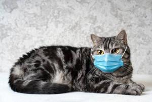 Quarantined Cat