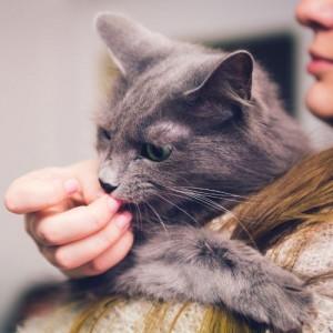 cute cat licking a hand