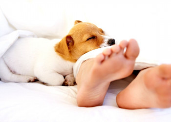 What Does It Mean When A Dog Lays On Your Feet? featured image