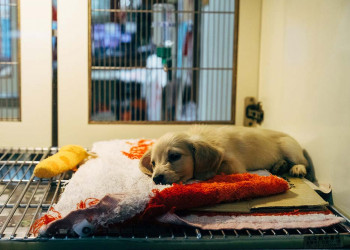 puppy laying on a bed