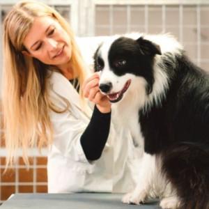 vet cleaning the dog eyes