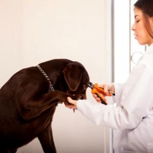 vet cutting dog nails