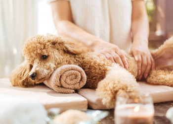 How To Hypnotize a Dog | Pet Struggles